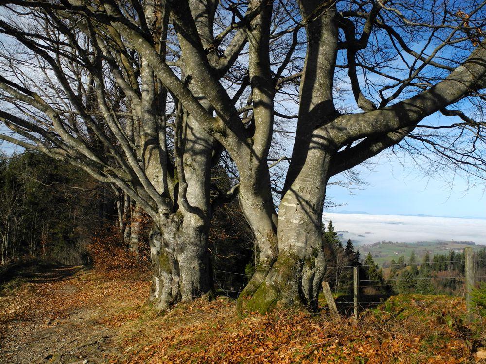 Uralte Baumreihen markieren im Napfgebiet die Grenzlinie zwischen Bern und Luzern. (© Judith Rickenbach)