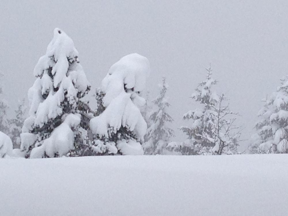 Schneebeladene Tannen fotografiert von Manuela Hadermann auf dem Stoos.