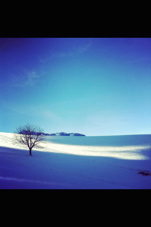 Simone Krebser's Bild von Winter und Schnee zeigt strahlend blauen Himmel.