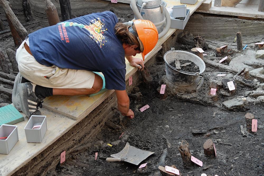 Ausgrabung in Zug-Riedmatt: Die dunkle Fundschicht besteht aus erhaltenen Pflanzenresten. Gut erkennbar sind grössere Hölzer und die Pfähle.