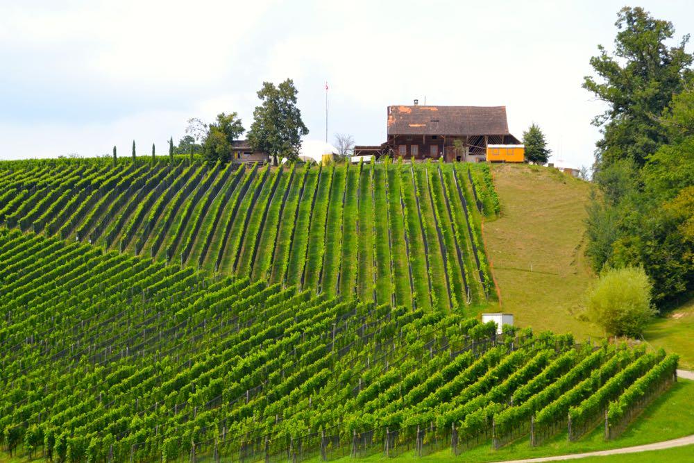 Auf dem Weingut Sitenrain in Meggen werden auf drei Hektaren Reben angebaut.