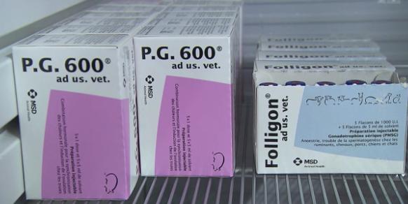 Aus dem Hormon PMSG werden Hormonpräparate wie «Folligon» und «P.G.600.» hergestellt – beide sind in der Schweiz zugelassen.