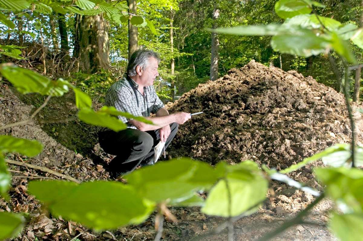 Umweltschutzpolizist Beat Lötscher und eine illegale Ablagerung von organischen Abfällen im Wald.