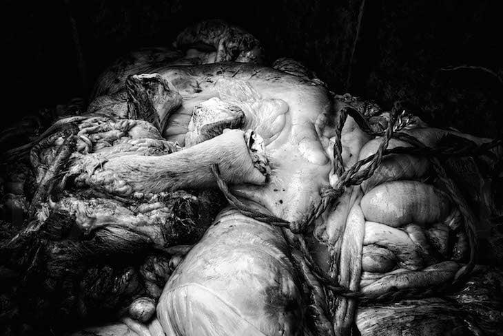 «Wie viele Teile der Tiere heute einfach weggeworfen werden, weil niemand mehr Innereien essen will beispielsweise – das ist wirklich tragisch. Früher hat man noch versucht, möglichst das ganze getötete Tier zu verwerten», sagt der Fotograf. (Bild: Christ