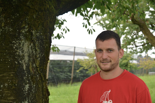 Bauer Philipp Hotz: «Unsere Hochstämmer können wir vor der Kirschessigfliege nicht schützen.»