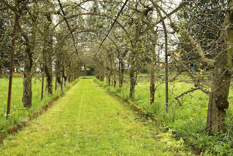 Der Kapuzinergarten ist eine Oase der Ruhe und Besinnlichkeit. (Bild: Jutta Vogel für SAH Zentralschweiz)