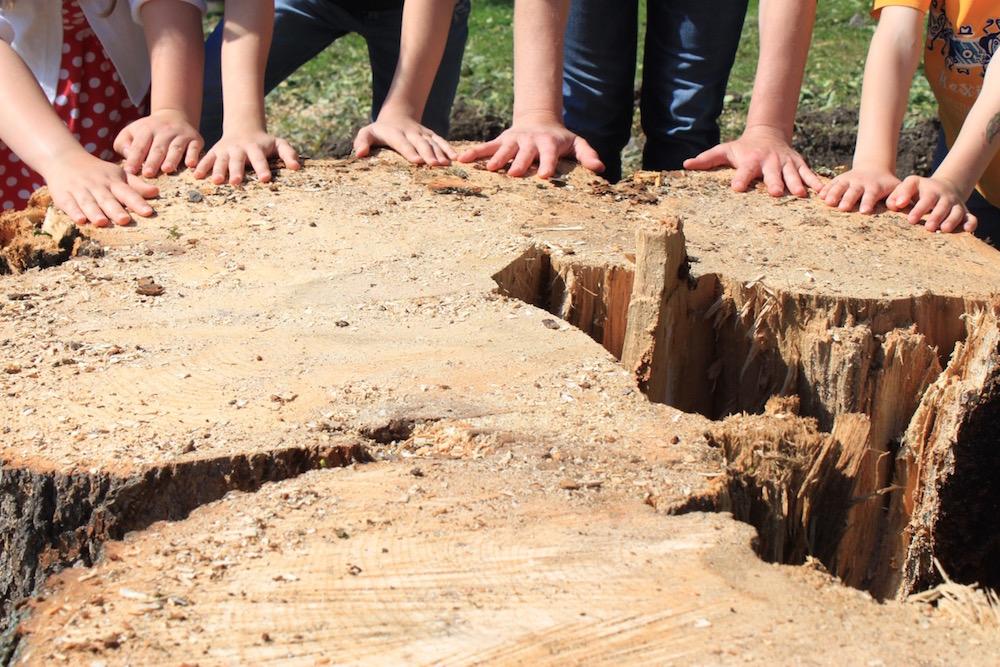 Gut sichtbar: Der Baumstamm, der innen hohl ist. Doch heisst das auch, dass der Baum krank war? (Bild: zvg)