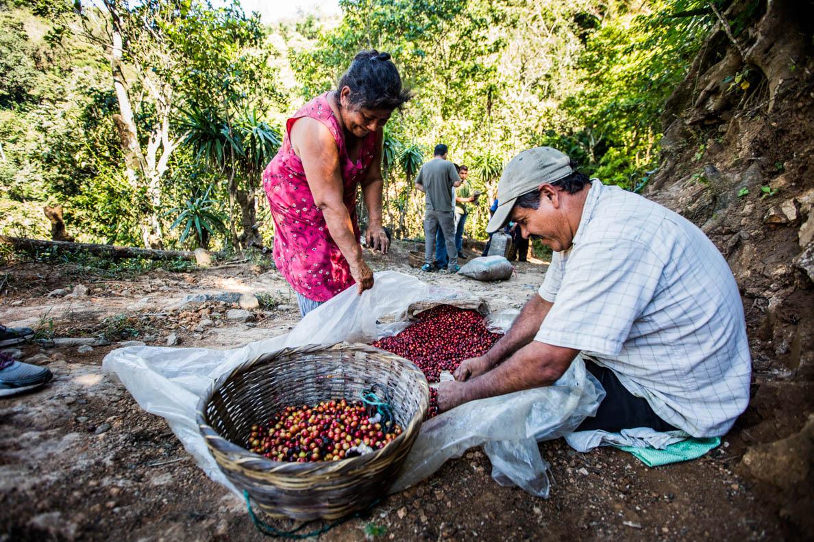 Impression von der Kaffeeplantage in El Salvador (Bild:Jianca Lazarus).
