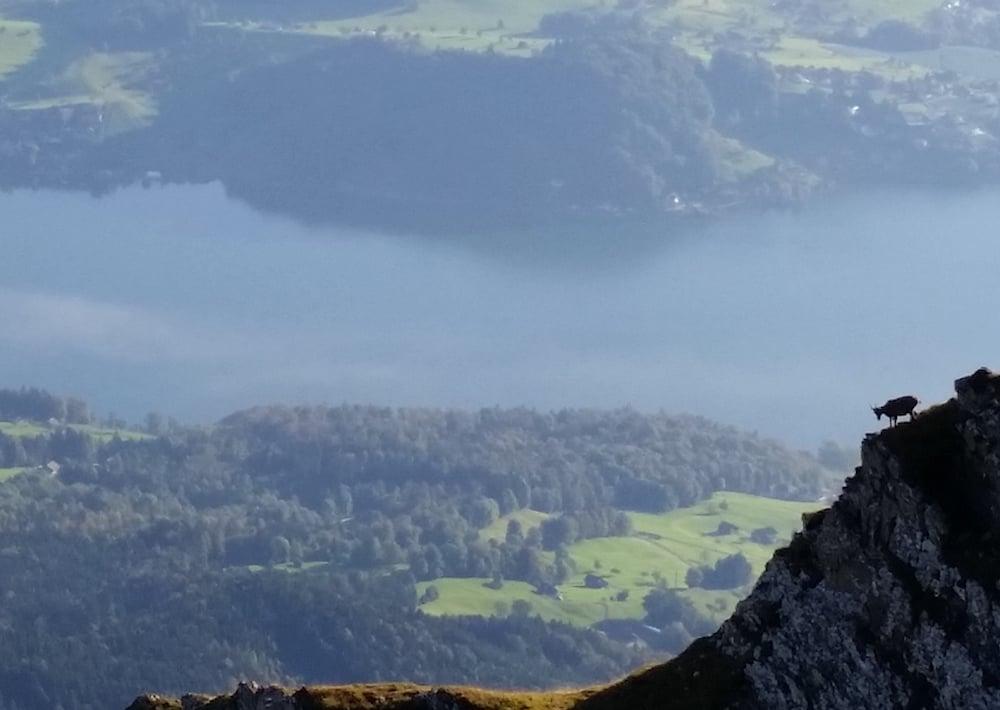 Finde den Steinbock: Blick von Pilatus Kulm auf den Vierwaldstättersee (Bild: Luca Wolf).
