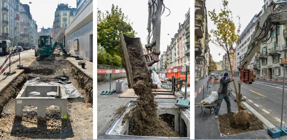 So wurden und werden die Bäume in die vorverlegten Betontröge verpflanzt (Bilder: Alfons Gut).