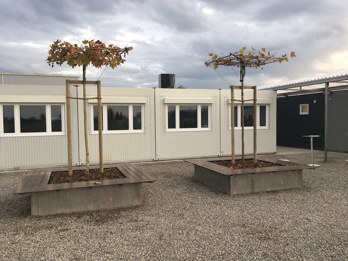 Die beiden Bäume sind ein Willkommensgeschenk der Bauherren und sollen als Treffpunkt zwischen Bevölkerung und Asylsuchenden dienen.