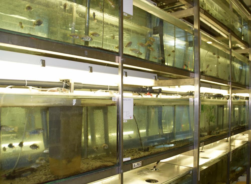Dutzende Fischpopulationen sollen neue Forschungserkentnisse liefern.