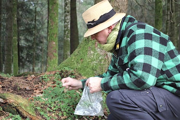 Stefan Wiesner pflückt Kleeblätter vom Waldrand.
