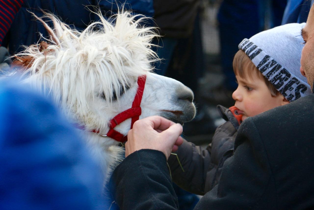 Ob das Kind weiss, dass Lamas spucken können?