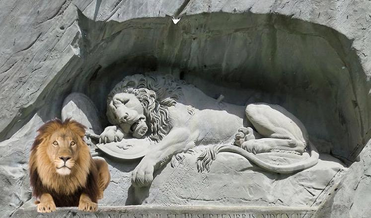 Ihm passt der Sonnenplatz. Am Löwendenkmal lebt neu ein echter Löwe.