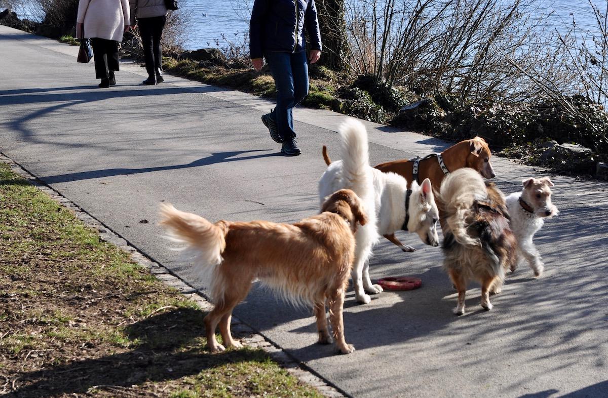 Die Hunde und Spaziergänger auf dem Churchill-Quai: So ist die Situation heute.