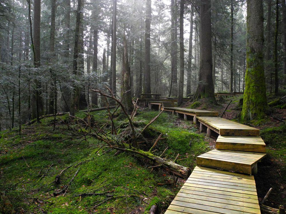 Im «Zauberwald» von Heiligkreuz.