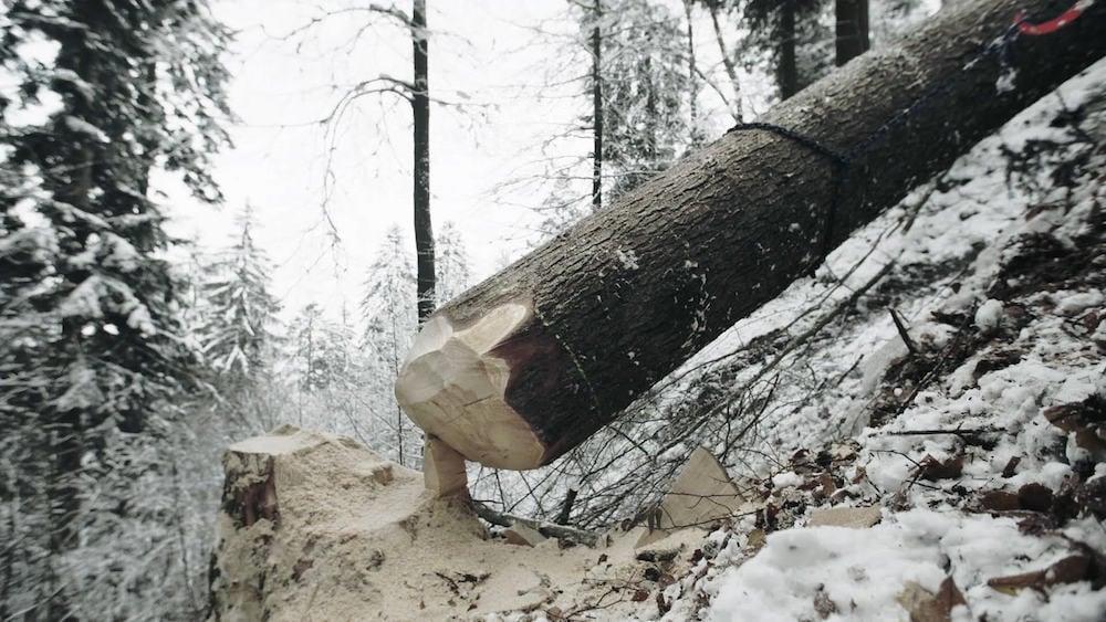 Am letzten Zipfel: ein Baum wehrt sich noch gegen den Sturz zu Boden.