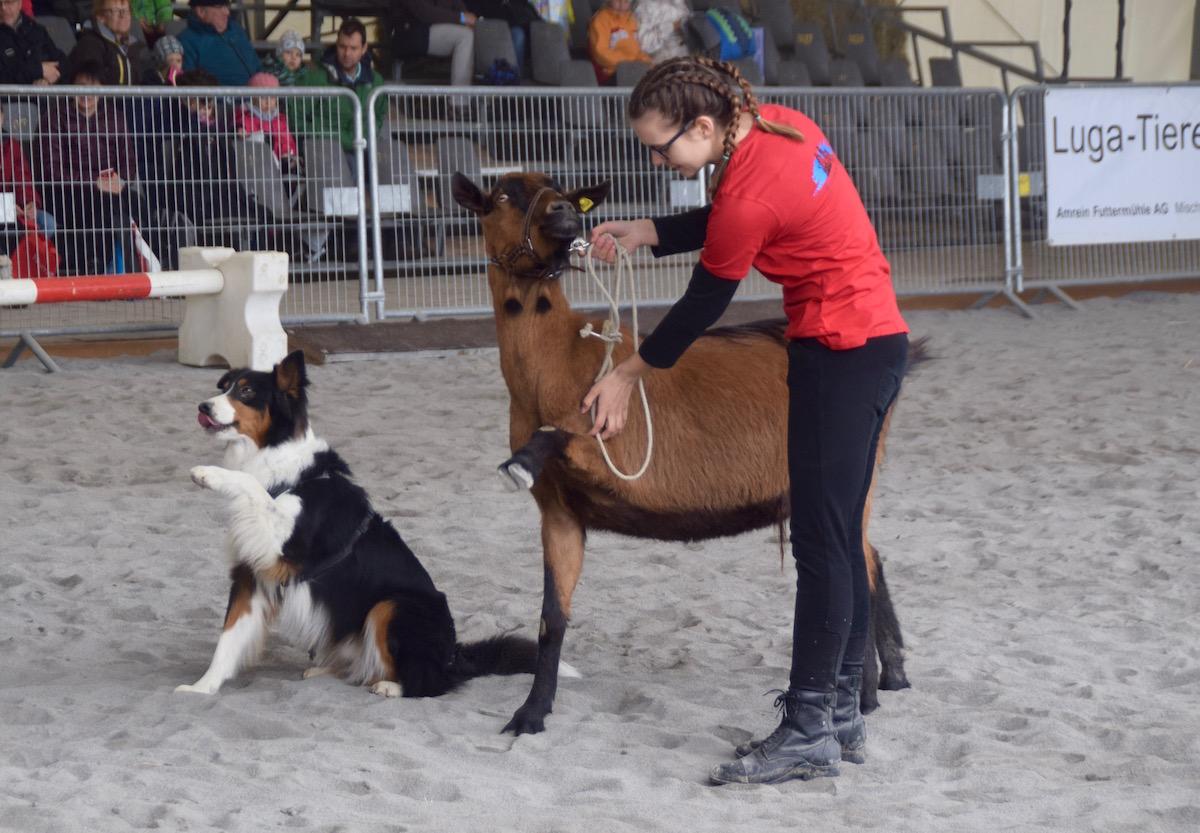 Hund «Spike» und Ziege «Peterli» geben Pfötchen.