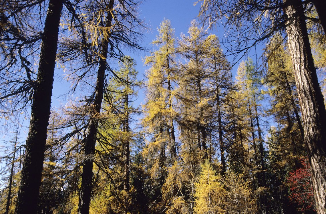 Machen Sie Waldspaziergänge. Der Bireggwald hat so einiges zu bieten. (Bild: Aura)