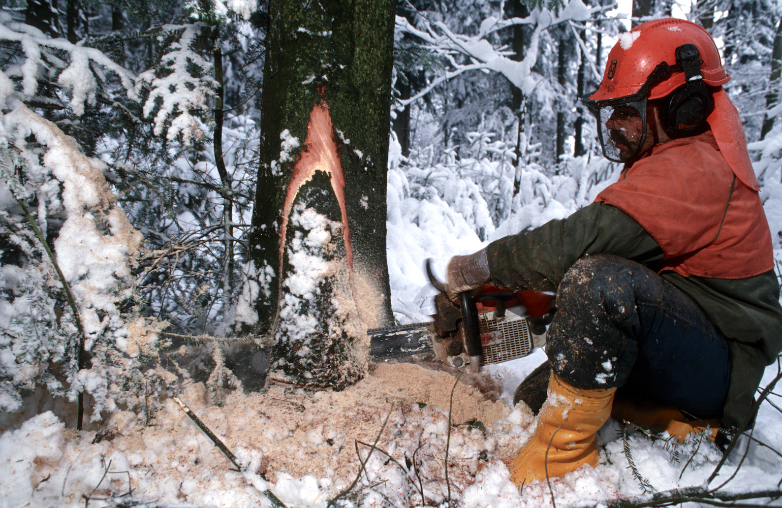 Die gefährlichsten Jobs der Schweiz: Förster oder Waldarbeiter.