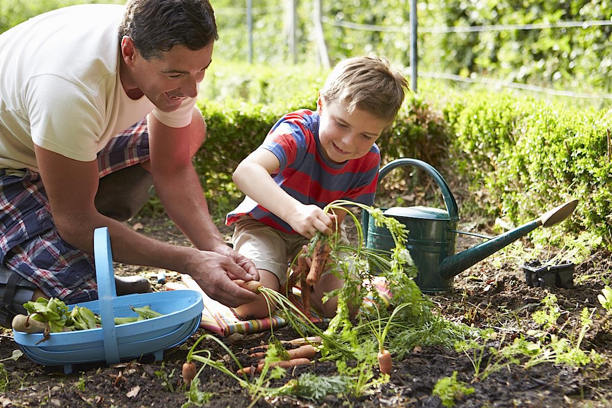 Vater und Sohn pflanzen zusammen Rüebli.