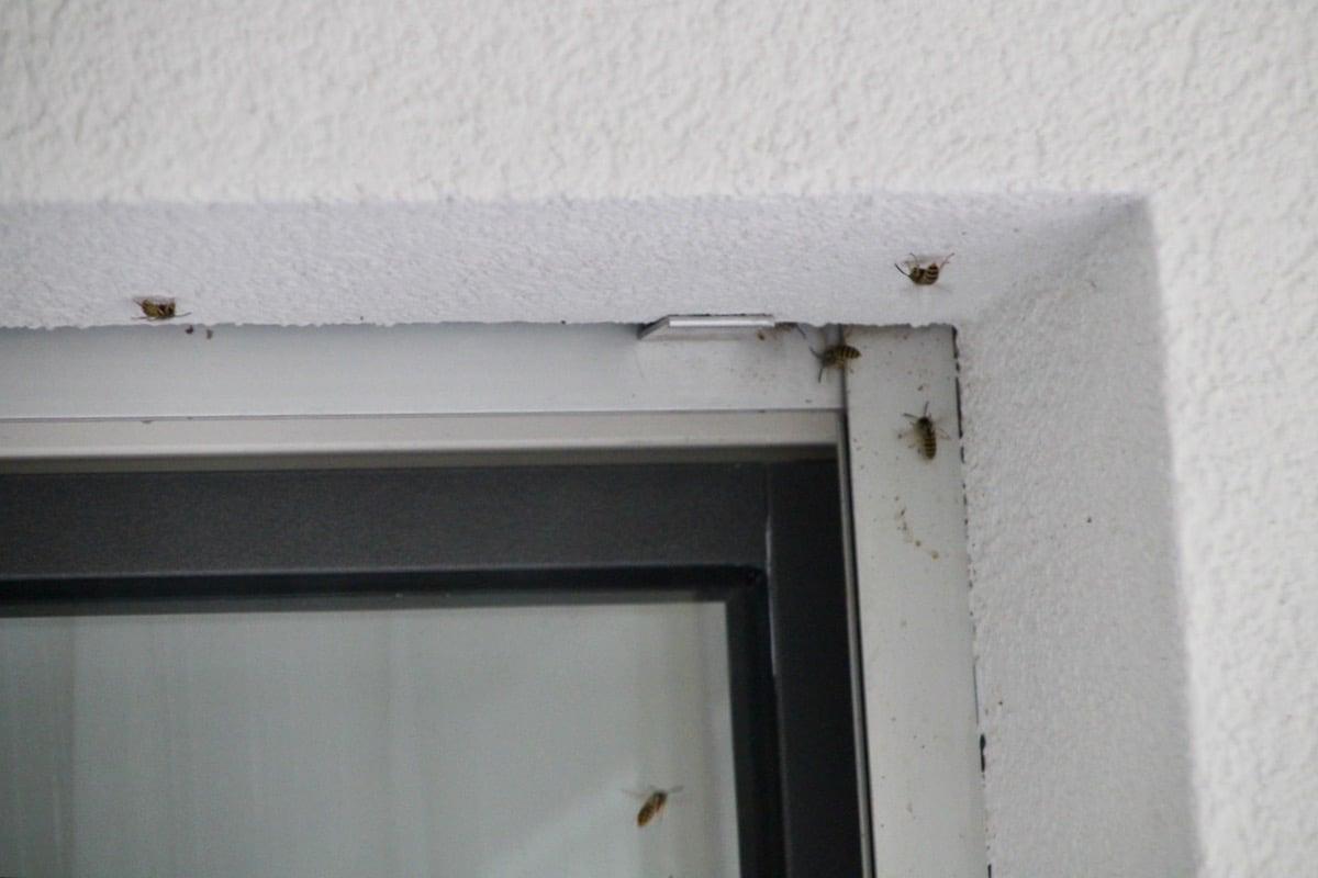 Hier wohnen sie (noch), die Wespen.