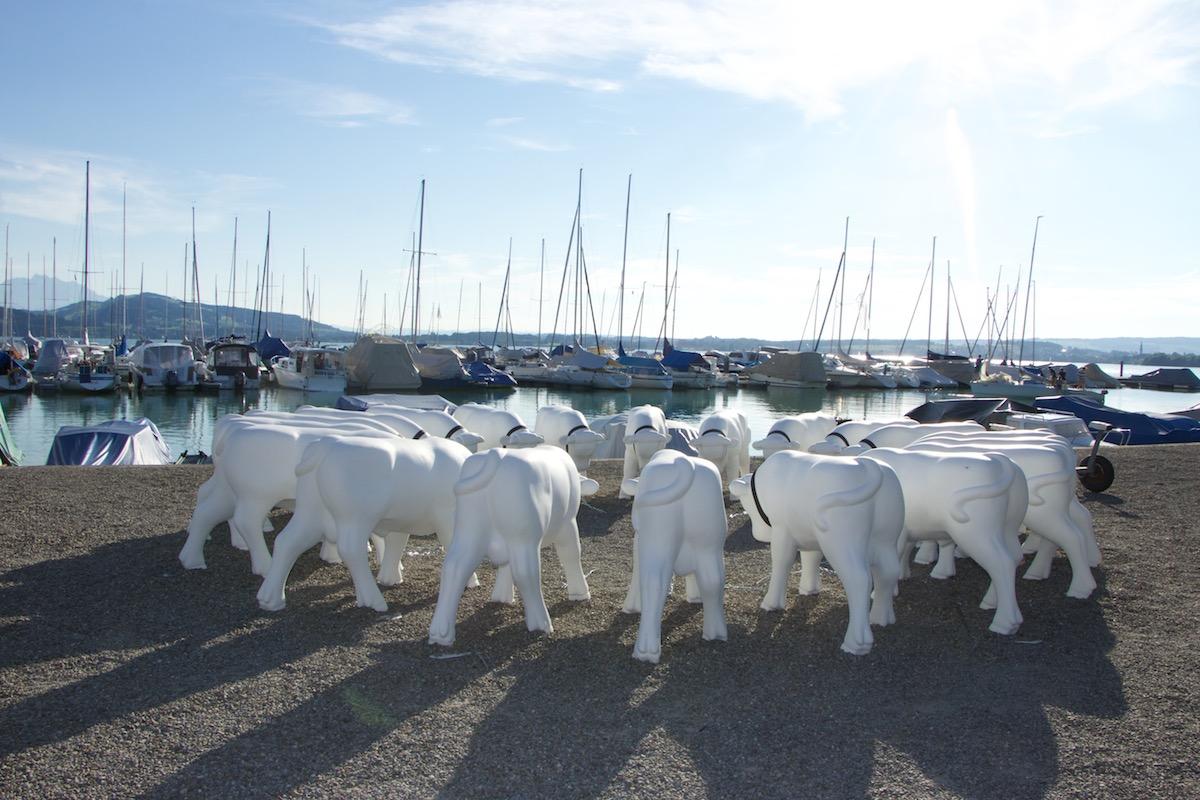 Diese weissen Stiere am Hafenweg in Zug darf man selbst verzieren. Sie warten auf kreative heimische Künstler.