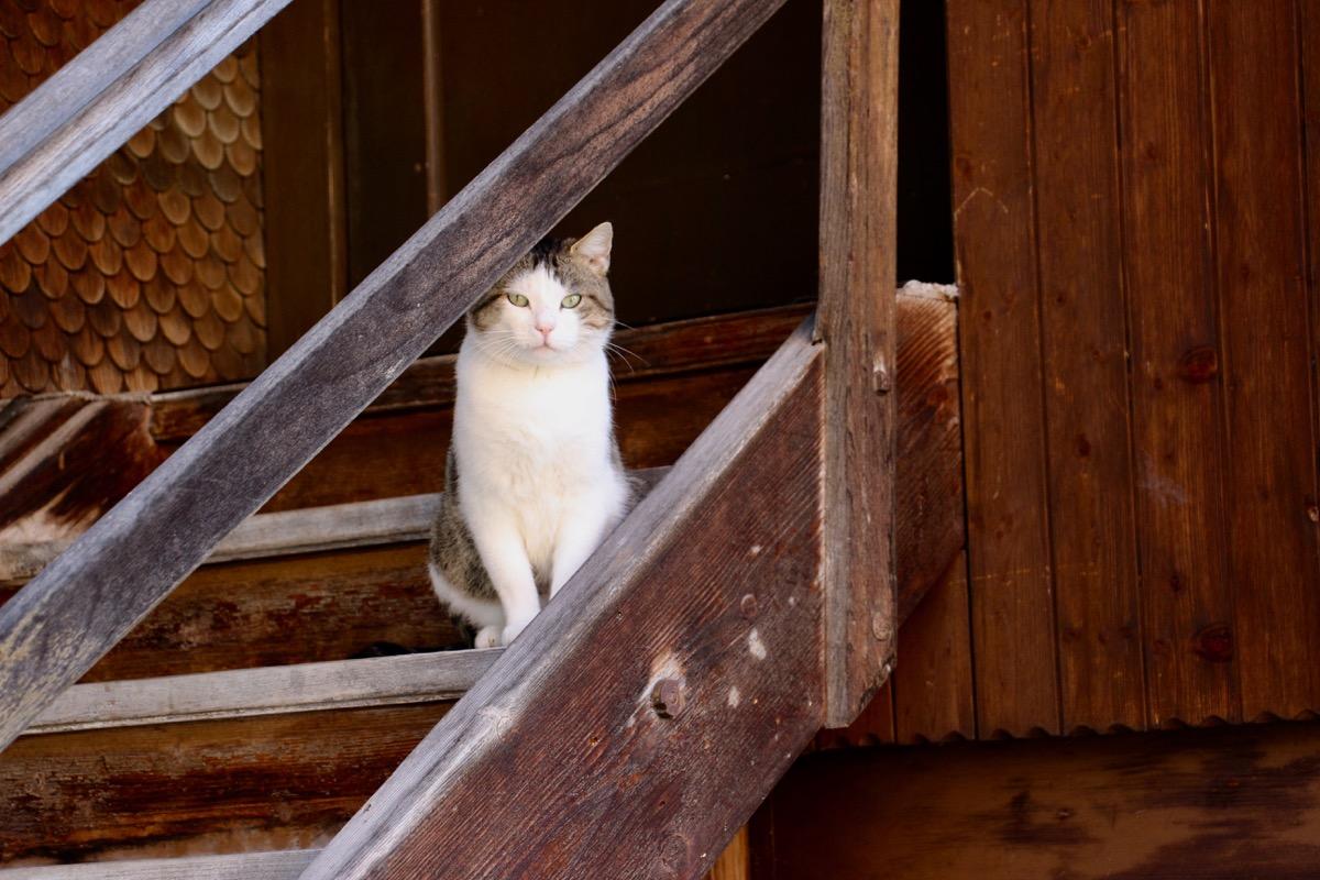 Die Katze wartet auf ihren Herrn.