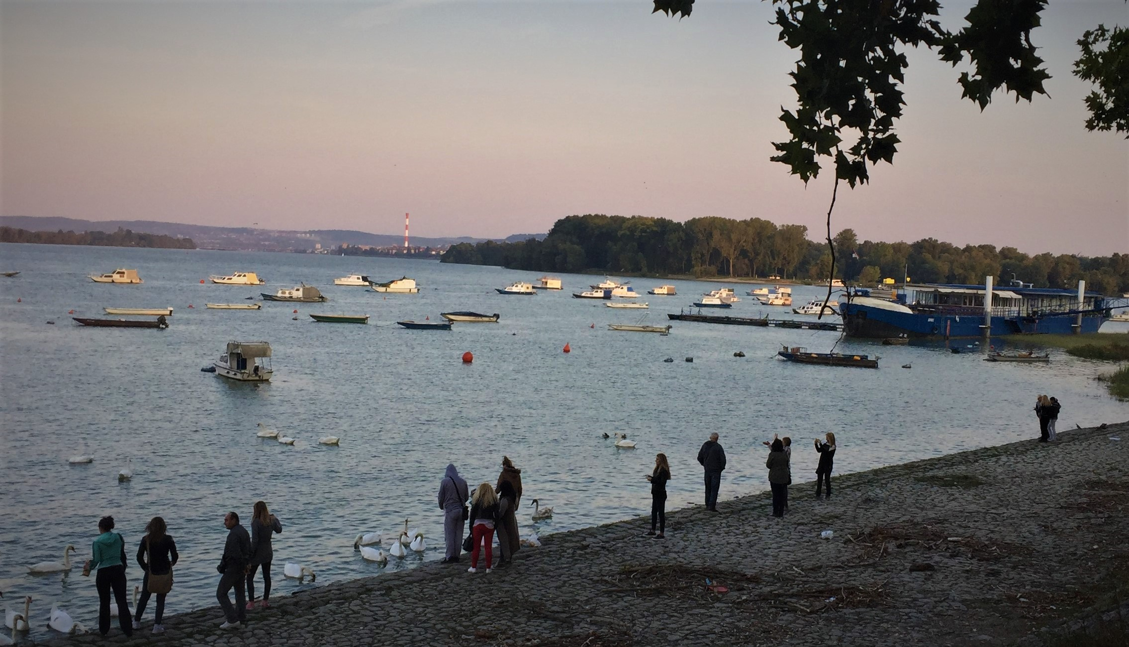 Sonntag, 1.10., 17.43 Uhr: Zemun/Kej osloboenja – Uferpromenade an der Donau und Sava.