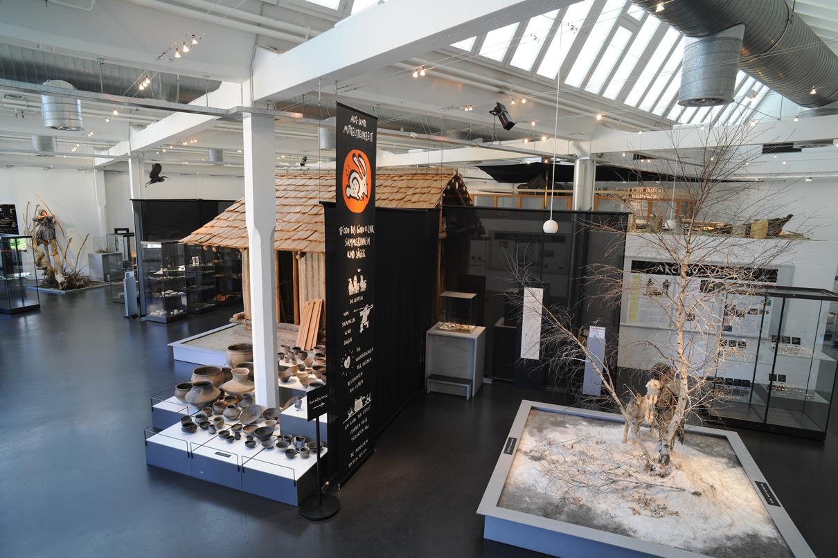 Blick in die aktuelle Ausstellung des Museums für Urgeschichte(n) Zug.