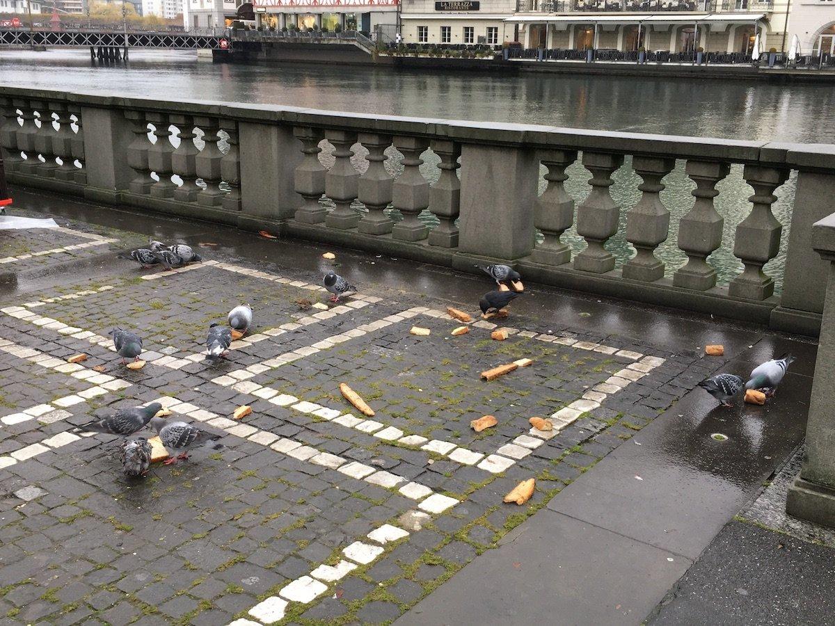 In der Stadt nicht gern gesehen: Tauben werden mit Brot gefüttert.