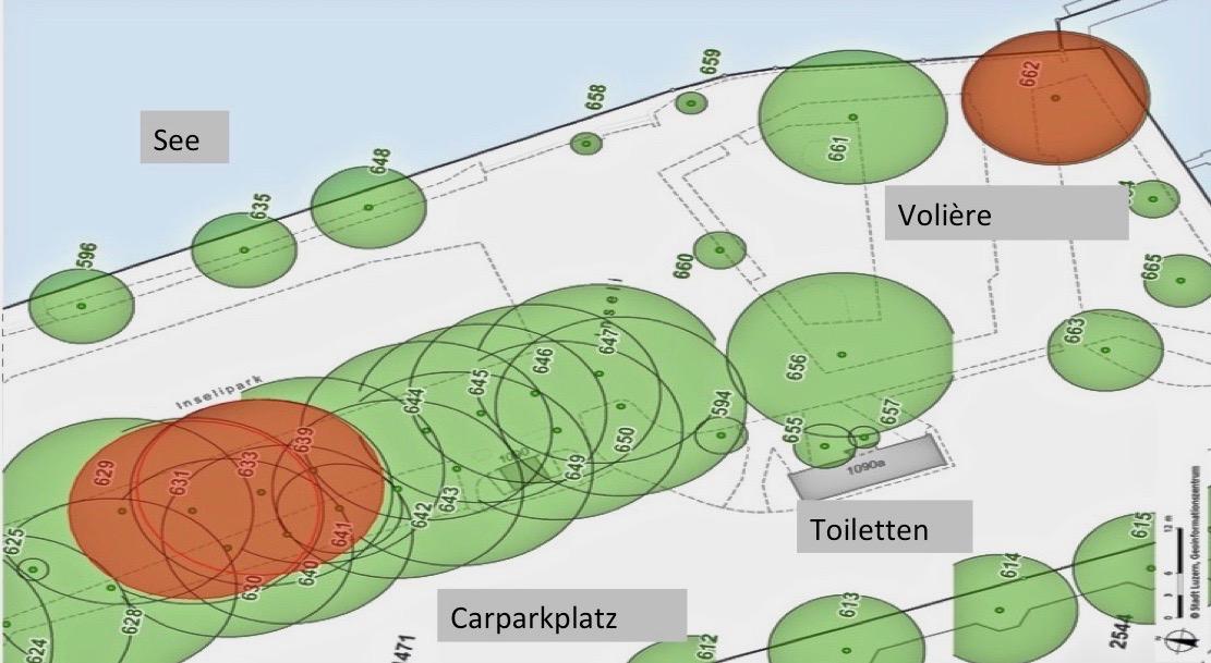 Plan der Bäume auf dem Inseli: Die roten Bäume sind krank und werden gefällt.