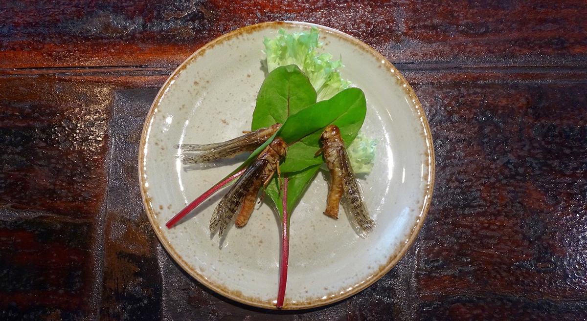 Mall-Besucher können im «Nooch Asian Kitchen» nun Insekten kosten.