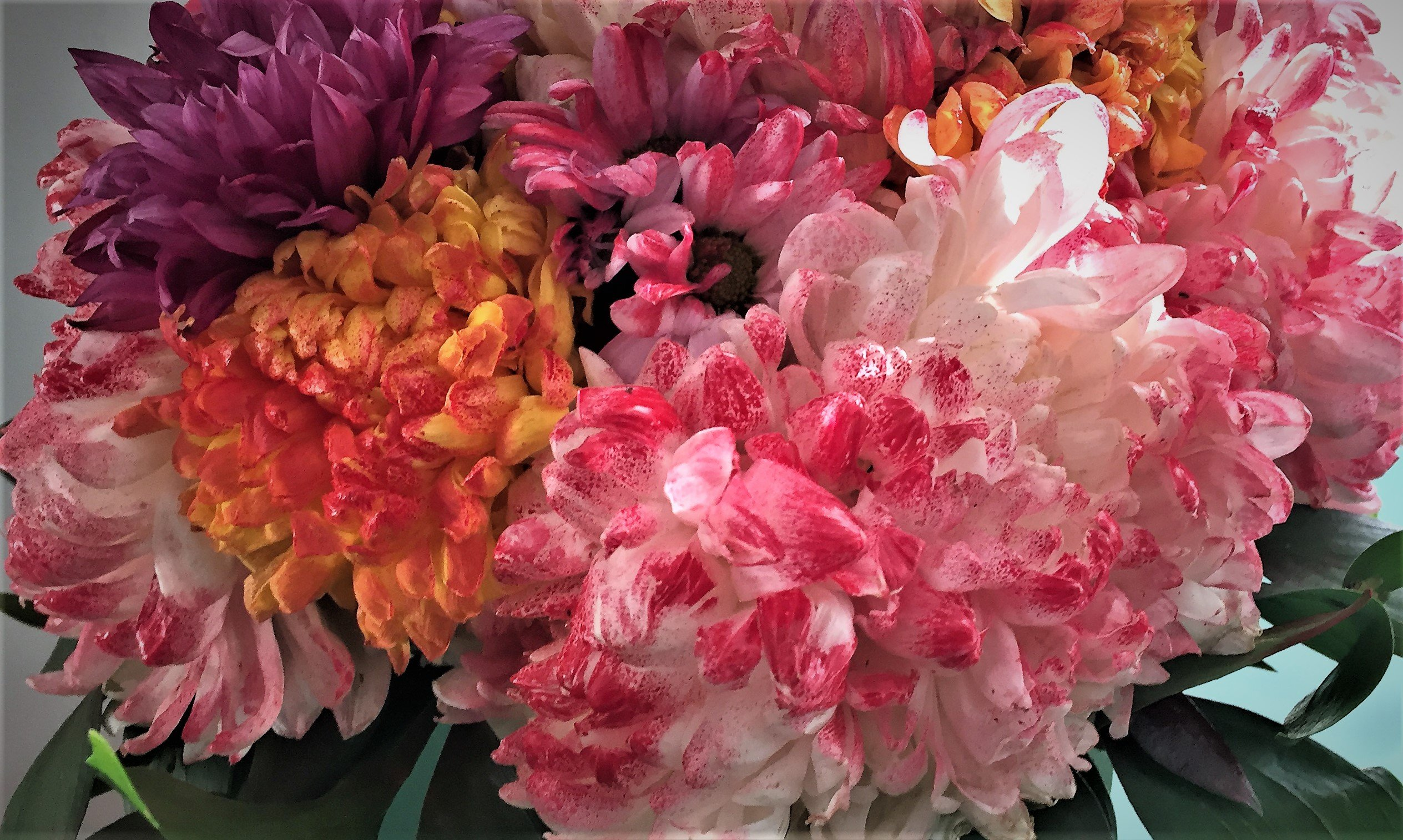 Aus weiss mach bunt: Mein gefärbter Blumenstrauss.
