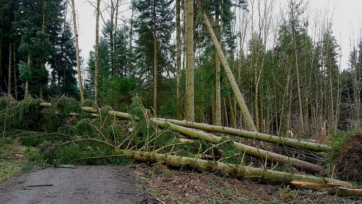 In Wäldern ist höchste Vorsicht geboten. Hier ein blockierter Waldweg im Herren-/Pfarrwald in Römerswil.