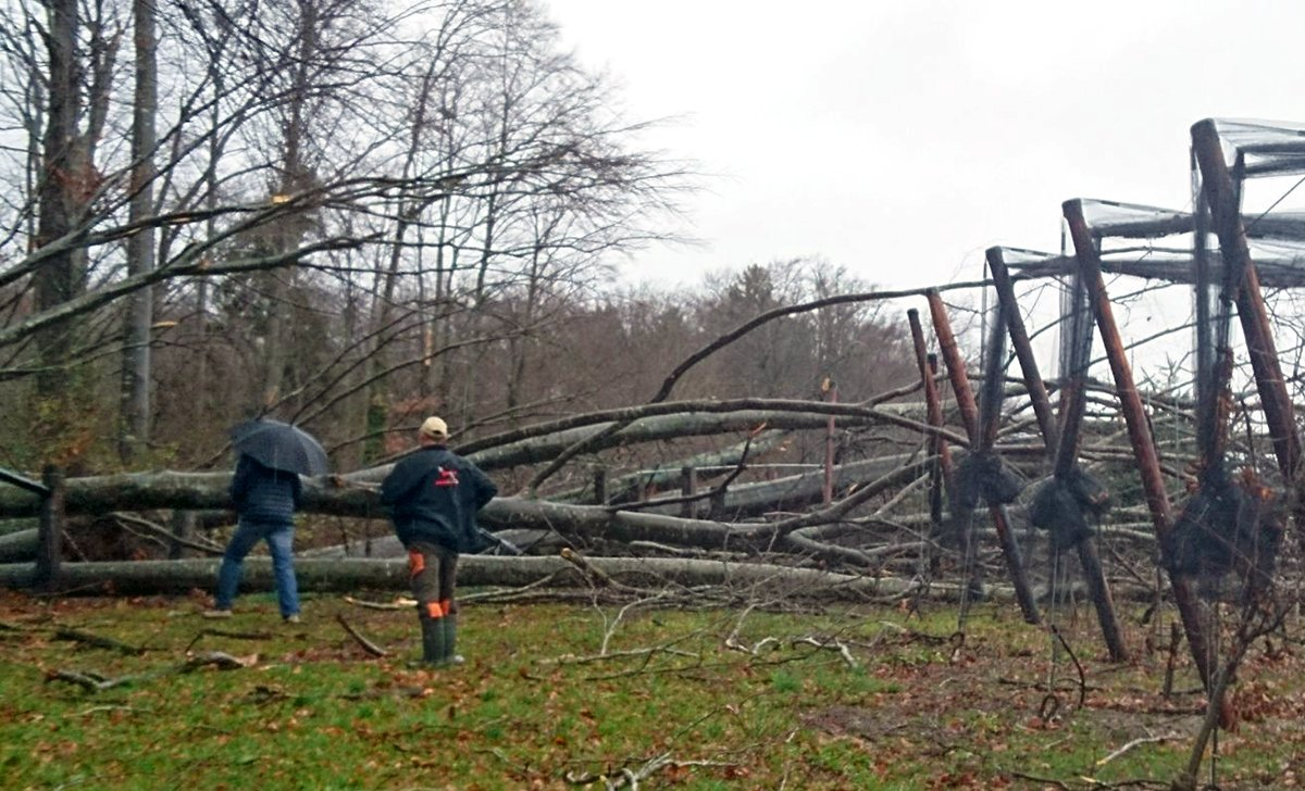 Auch Obstbauern traff «Burglind» hart: Sturmholz inmitten einer Obstplantage im Saffergarten (Seetal).