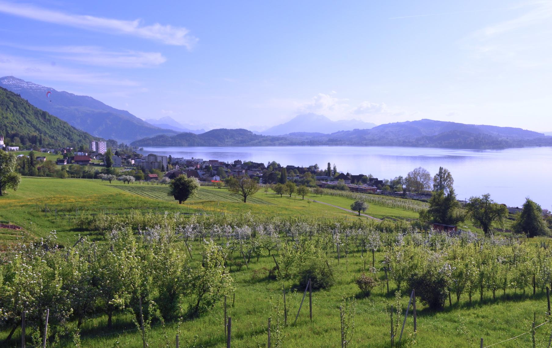 Aussicht vom nahen Meisenberg in die Zentralschweiz.