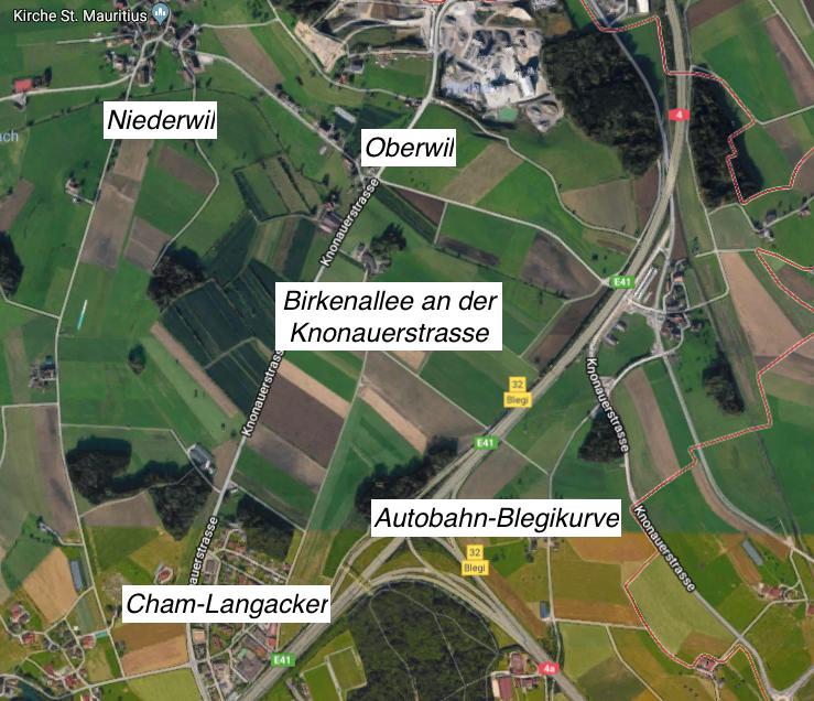 Hier zwischen Cham und Oberwil stehen die 21 Birken der Allee.