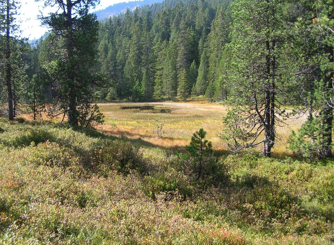 Eine Moorlandschaft im Entlebuch: Moore sind wertvolle Lebensräume für spezialisierte Arten.