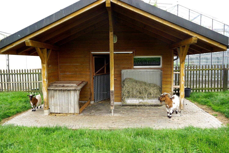 Zwei Ziegen wohnen ebenfalls auf dem Gefängnisgelände.