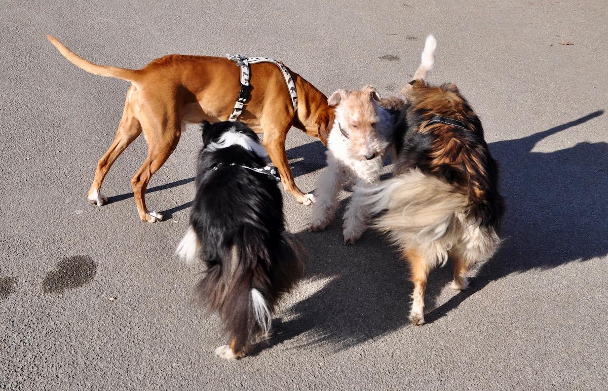 Die Hunde kennen sich am Churchill-Quai.