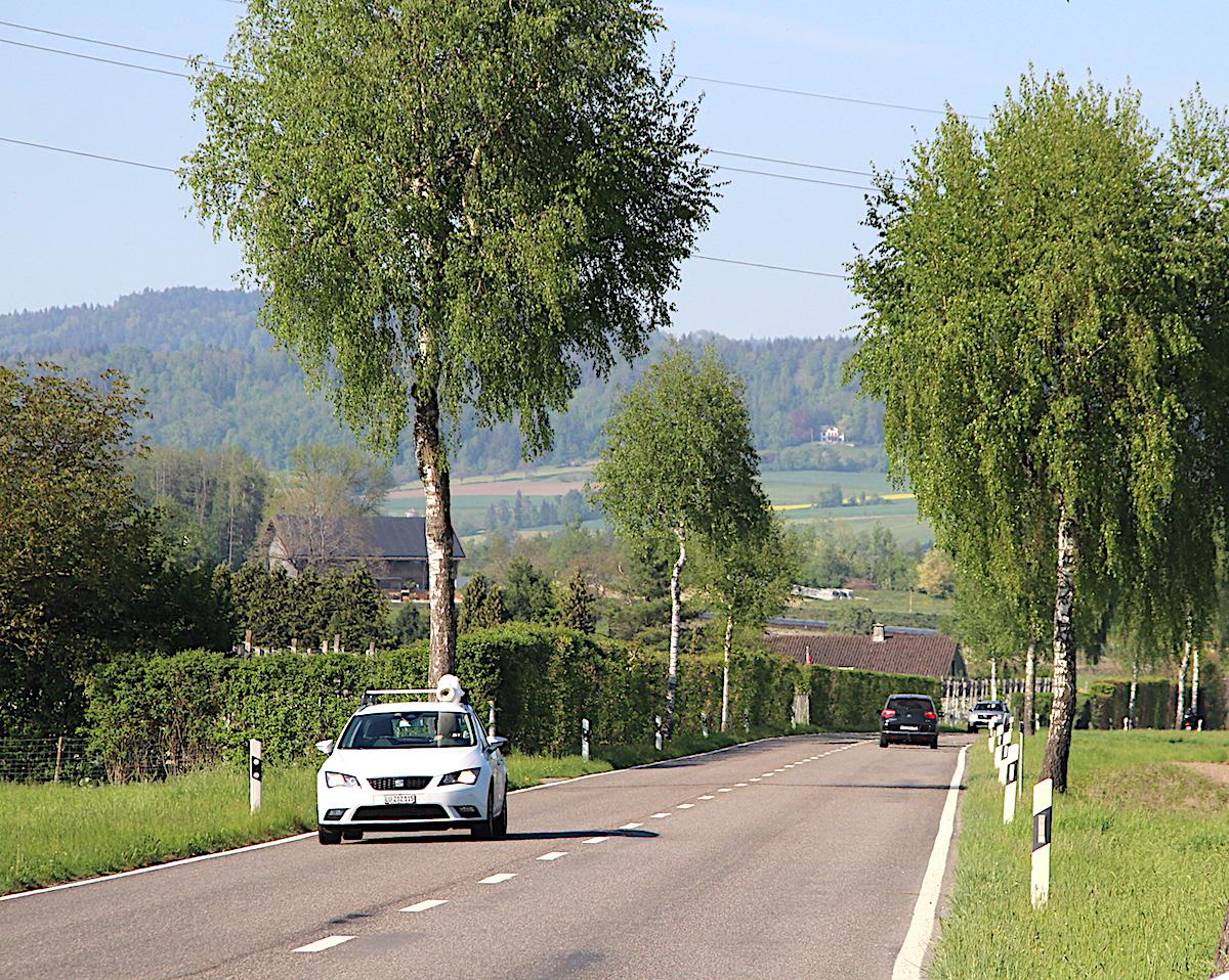 Die Birkenallee in Cham entlang der Knonauerstrasse soll abgesägt werden. Angeblich sind die Bäume krank. Hauptgrund für die beabsichtigte Fällung der Bäume ist jedoch die geplante Strassenverbreiterung.