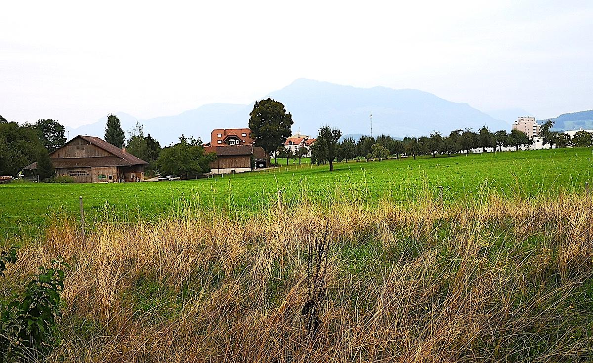 Auf der Parzelle Allmendhof soll das Gymnasium für den Ennetsee zu stehen kommen. Doch der Verein Mehr Wert Cham und einige Anwohner wollen nicht, dass Landwirtschaftsland in der «grünen Lunge» Chams bebaut wird.