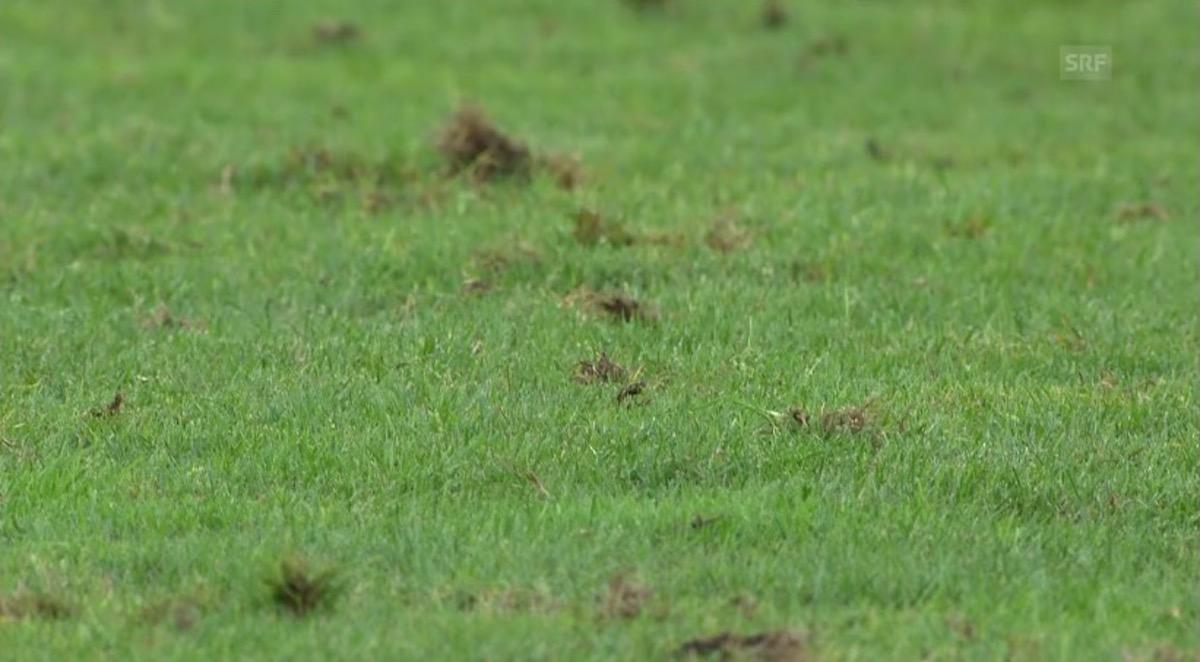 Der Rasen in der Swissporarena sieht beim Spiel gegen Olympiakos Piräus wenig erspriesslich aus. (Screenshot: SRF)