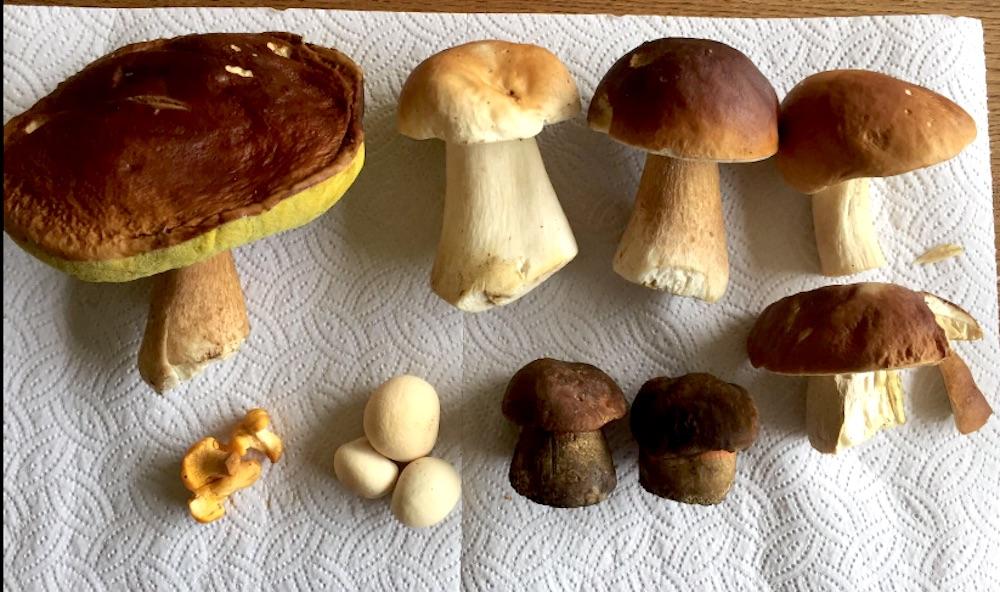 Es hat geregnet, jetzt spriessen die Pilze.