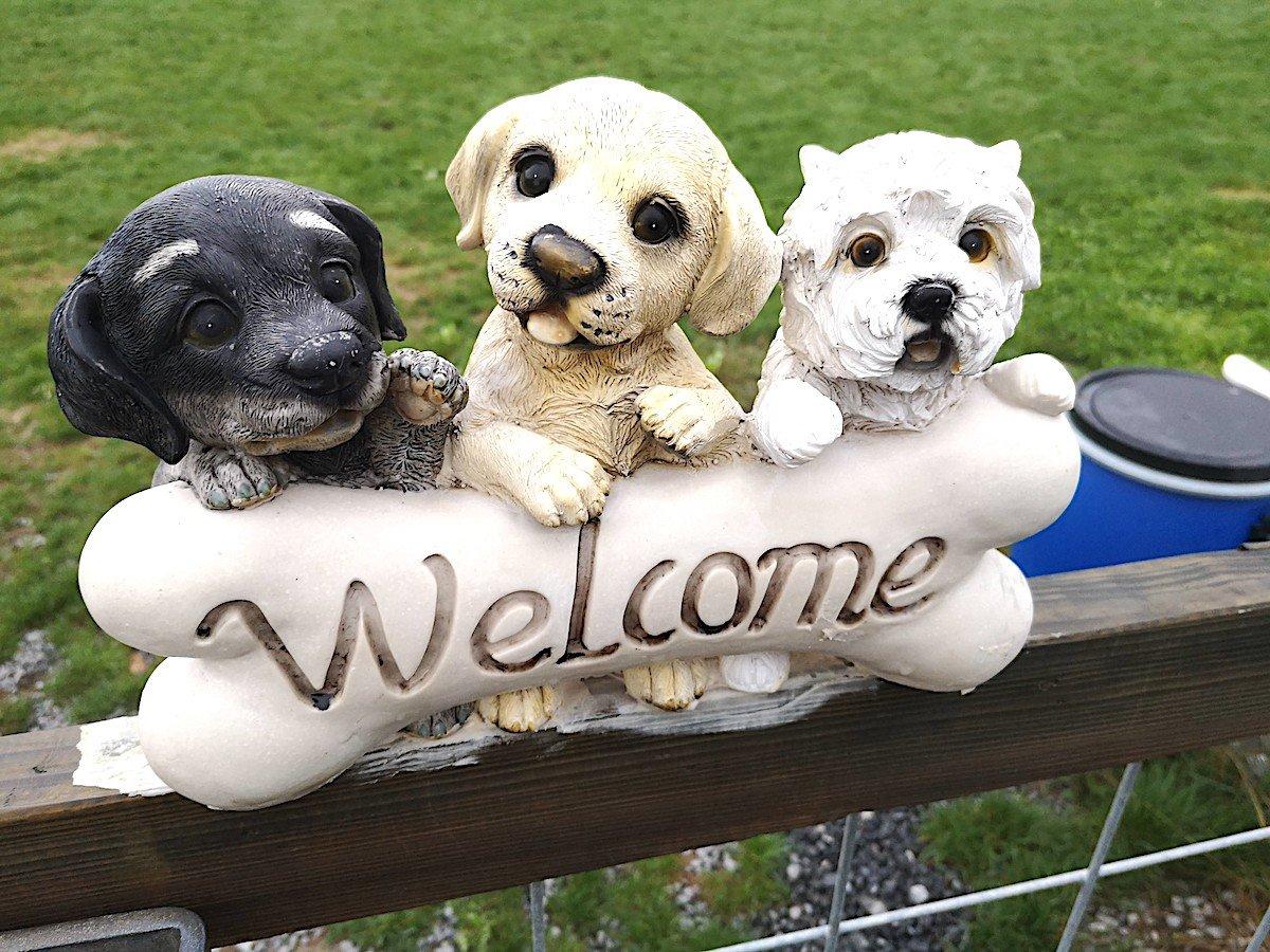 In Hünenberg in der Hundeschule Wolfsschule wird auch Englisch gesprochen – in speziellen «Dog Trainings» für Expats und für solche, die ihr Englisch verbessern wollen.