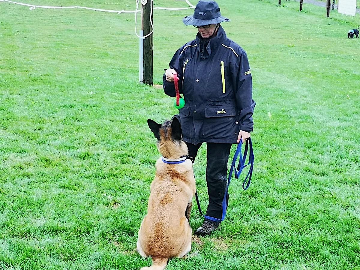 «Platz!» Oder: «Sit!». Je nach dem, was der Hund eben versteht.