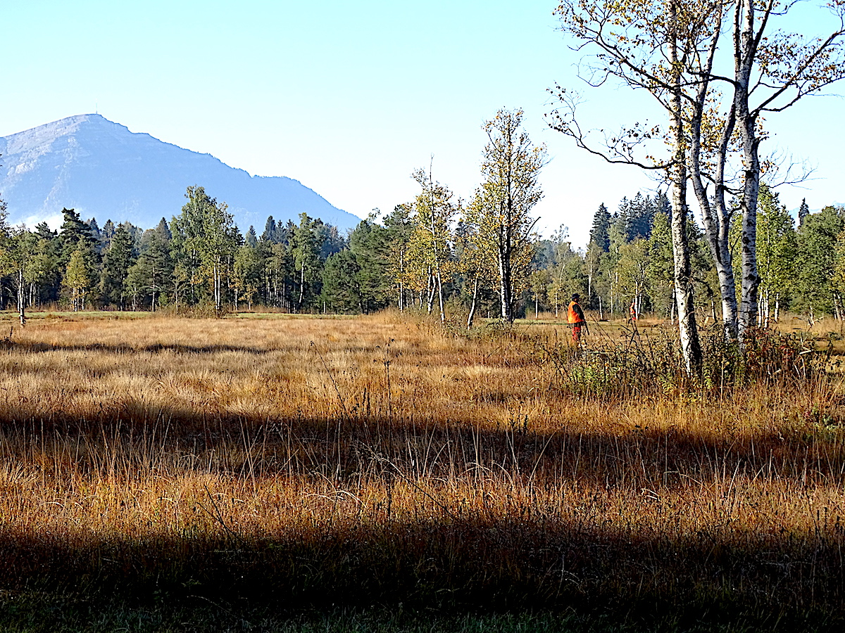 Romantisch: die Hochmoor-Landschaft auf dem Zugerberg. Doch dann fallen Schüsse.