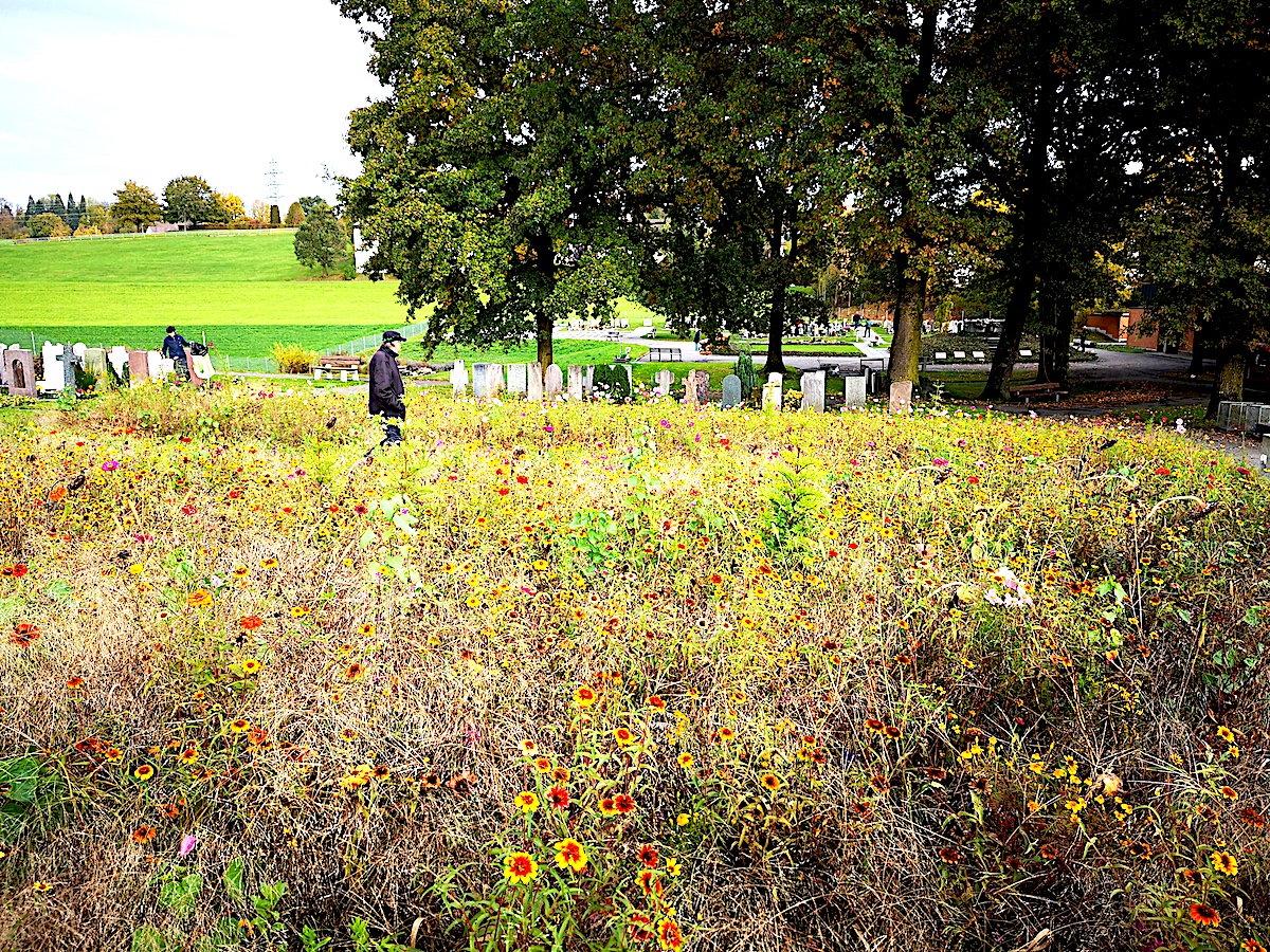 Dieses Blumenfeld war einmal ein Erdbestattungsfeld. Die Gräber wurden geräumt, die Leichname und ihre Überreste sind noch im Boden.